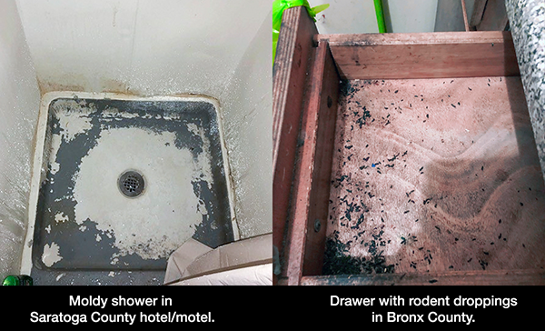 Photos of moldy shower and drawer with rodent droppings